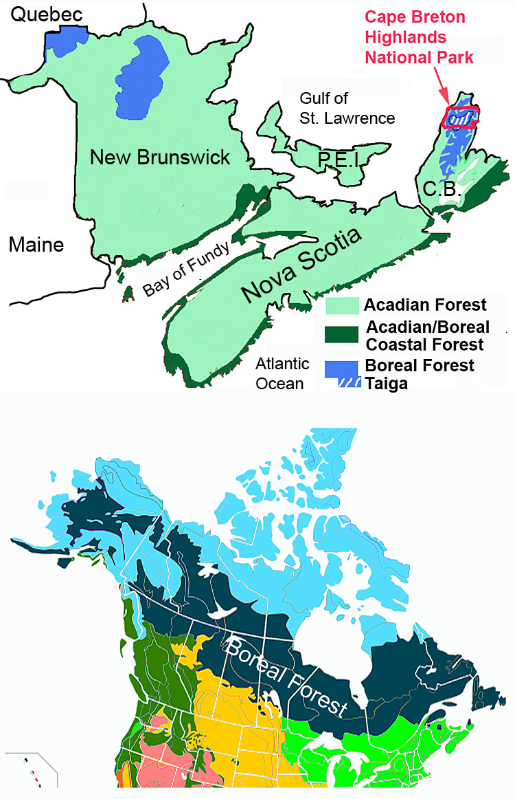 Protecting Nova Scotia S True Boreal Forest Nova Scotia Forest Notes