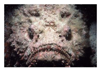 stonefish.jpg (37 KB)