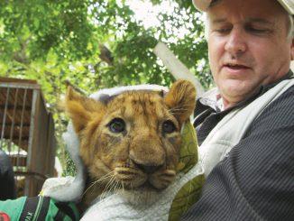 "photo courtesy of ""Lion Ark"" and ADI International—photo courtesy of ""Lion Ark"" and ADI International"