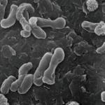 濾過バクテリア:『硝化菌の概要と平均倍増時間』