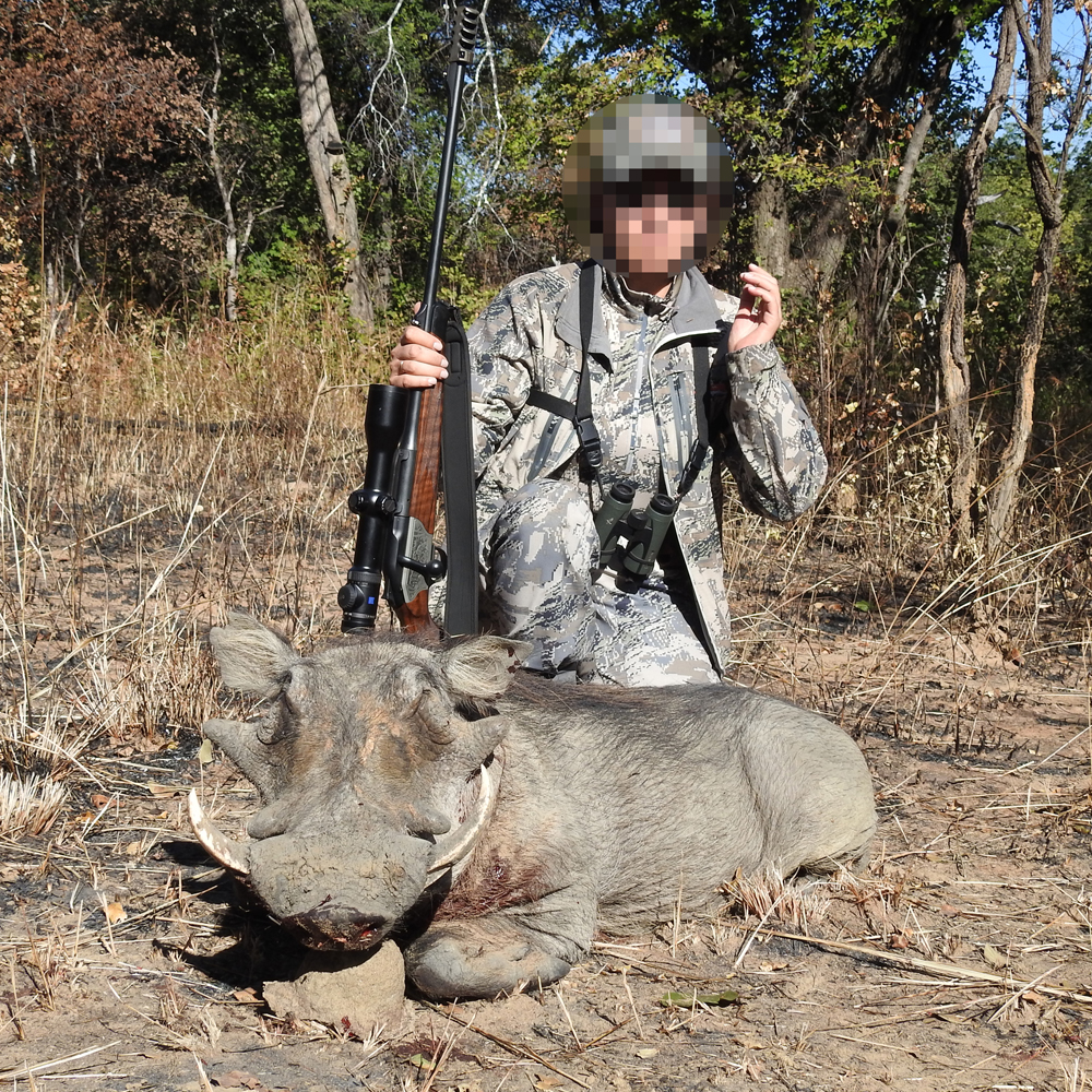 Warthog Hunt - Nsonga Game Management & Lodges