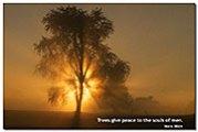 fog-Tree-T