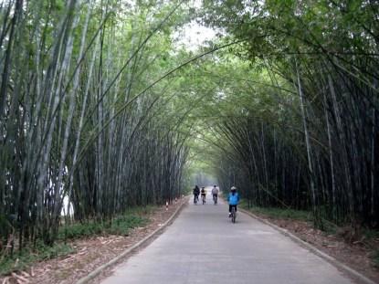 Bamboo Ocean, February 23-24 2013