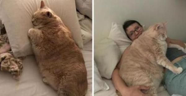 Толстого кота посадили на диету и приучают к активности ...