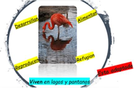 Adaptarse Para Sobrevivir Biología Primero De Secundaria Nte Mx Recursos Educativos En Línea