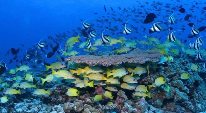 areas protegidas en el mundo parque nacional marino de hawaii