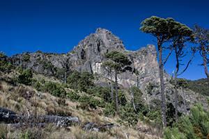 El Parque Nacional Cofre de Perote ya tiene programa de manejo - Consejo  Civil Mexicano para la Sivilcultura Sotenible