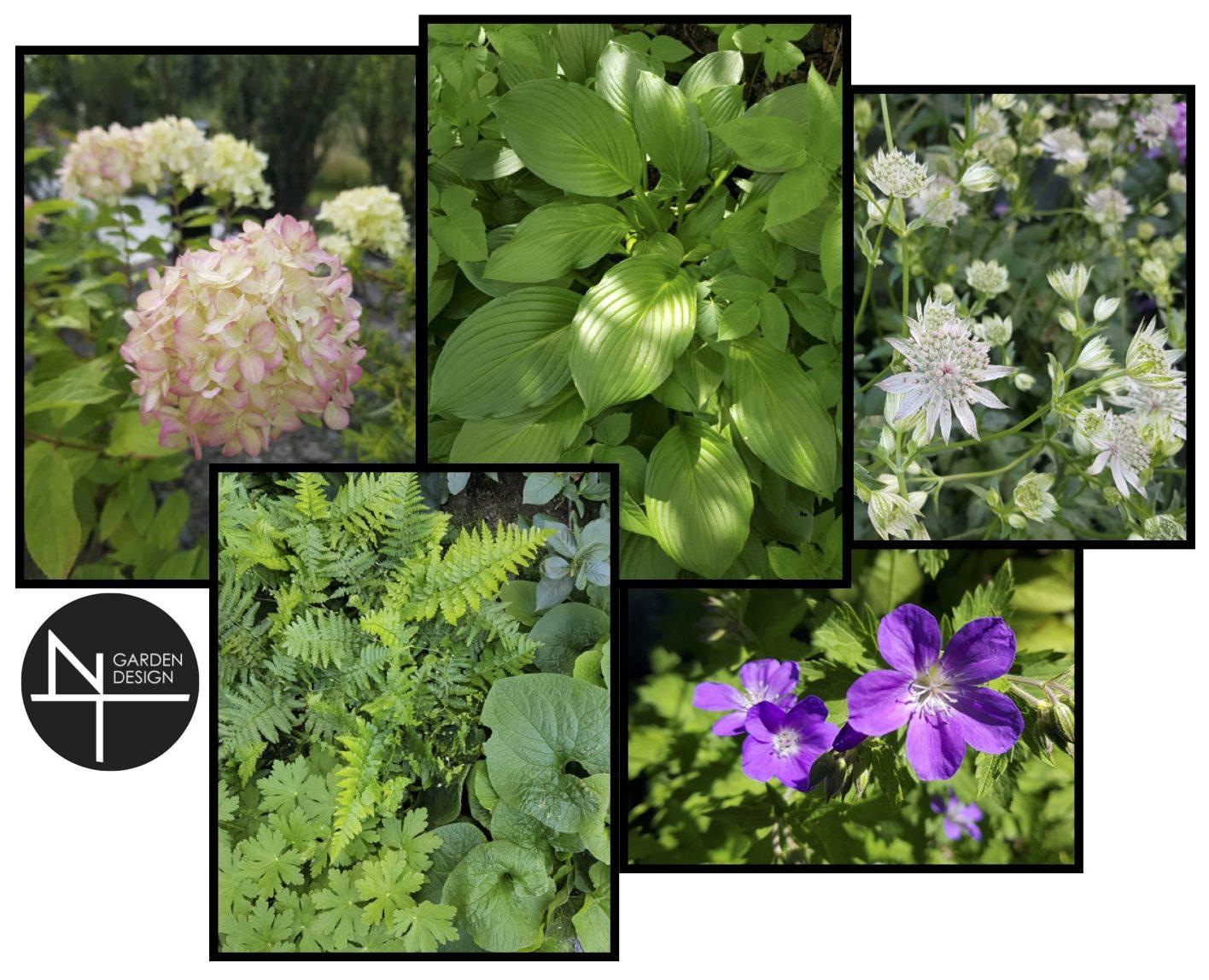 En inspirasjonstavle med en kombinasjon av planter i en NT Garden Design plantedesign