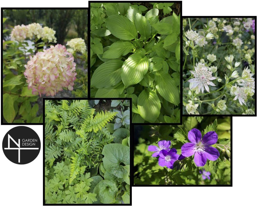 NT Garden Design plant moodboard