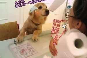 2011 12 17 13 52  20 - 狗狗日記-店長卡哥一天的工作生活