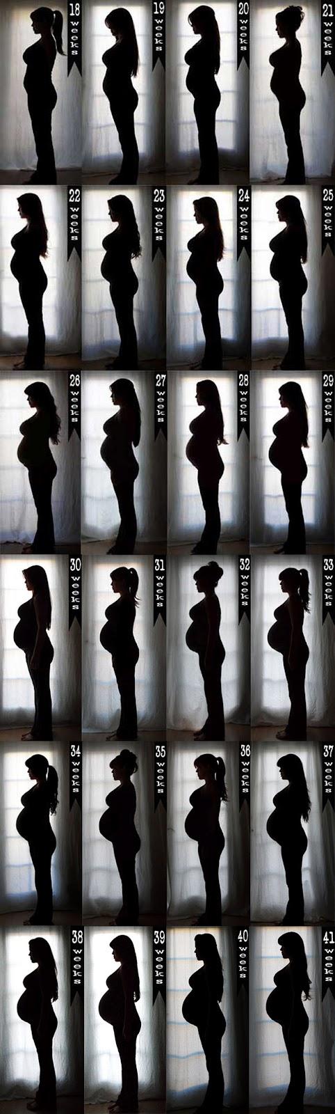 Registra la evolución del embarazo