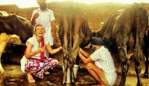 India highest milk producing country in the world 2020