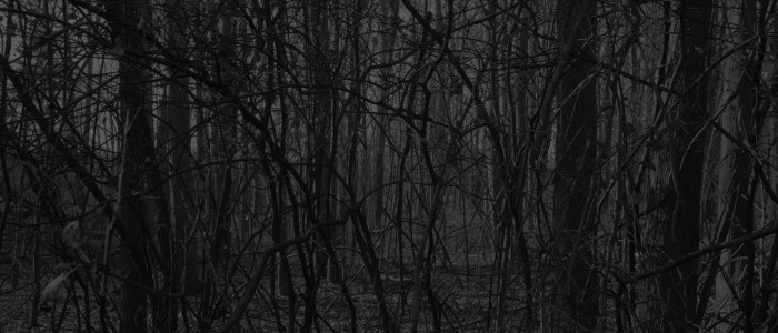 Collection Spotlight: Untitled #17 (Forest), Dawoud Bey