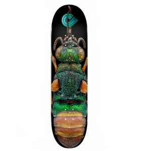 8.5″ Powell Peralta BISS Ruby Tailed Wasp Deck