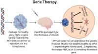 Γονιδιακή θεραπεία - Βασική αρχή