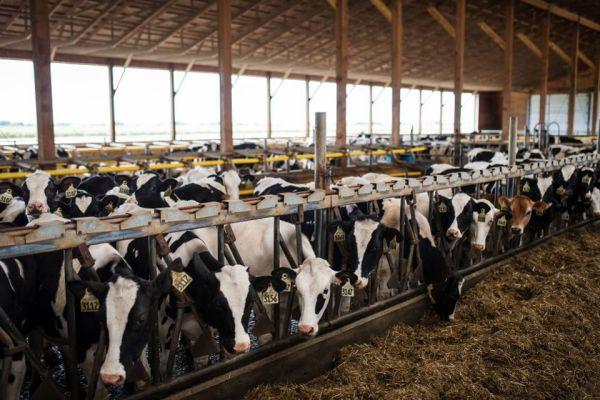 Ανησυχία για την αύξηση των μεταδοτικών από τα ζώα στον άνθρωπο ασθενειών