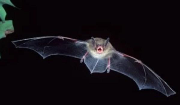 Επιστήμονες αναζητούν την προέλευση του νέου κορονοϊού σε νυχτερίδες – Συλλέγουν δείγματα στην Καμπότζη