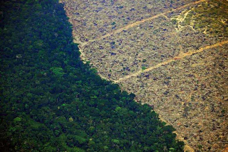Amazon: 1145 square kilometres of the world's greatest rainforest has been cleared in August 2019 alone