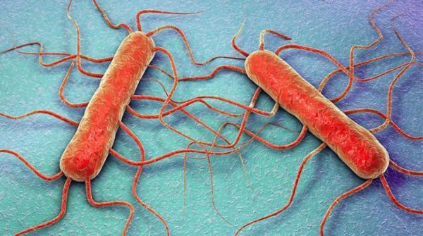 Λιστέρια (Listeria monocytogenes)