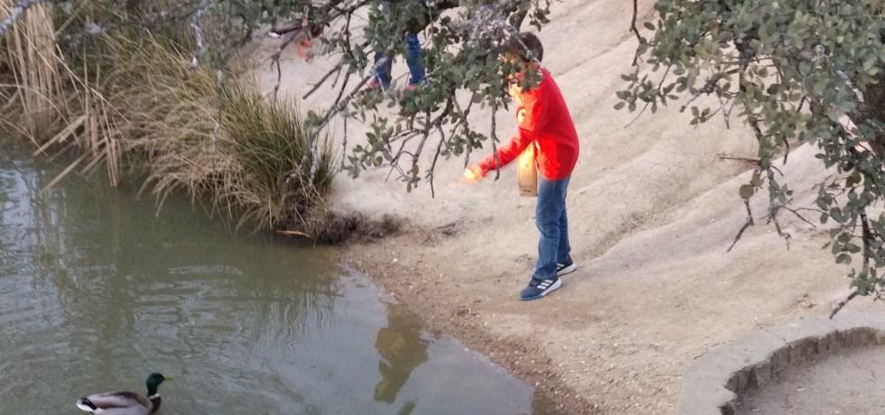 niño en lago de patos
