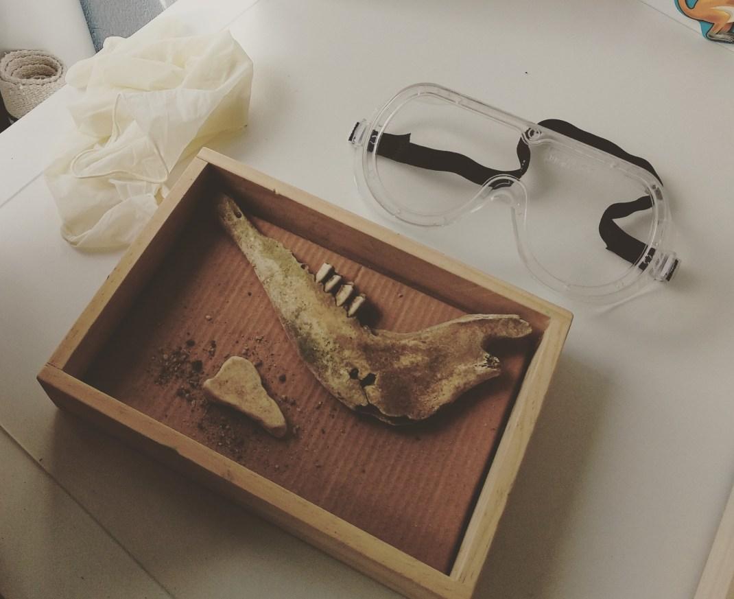 mesa de explorador con hueso de animal, gafas y guantes