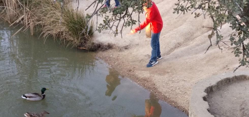 niño dando de comer a un pato en un lago
