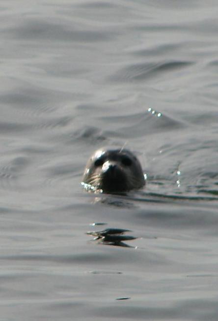 Vida marina también se aprecia en Governors island. (Foto Departamento de Parques).