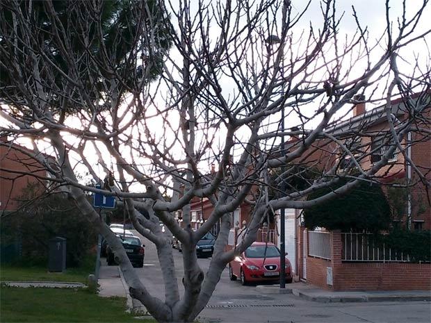calle-del-sector-3
