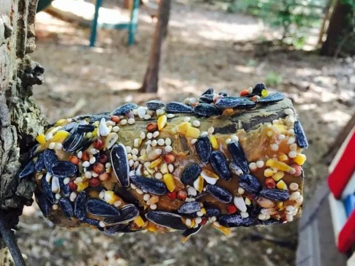 Summer Survival Bird Feeder Craft