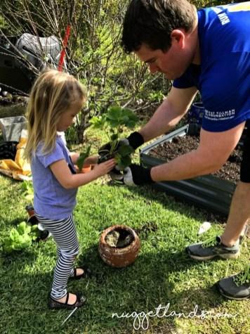 vegetable garden strawberry planting