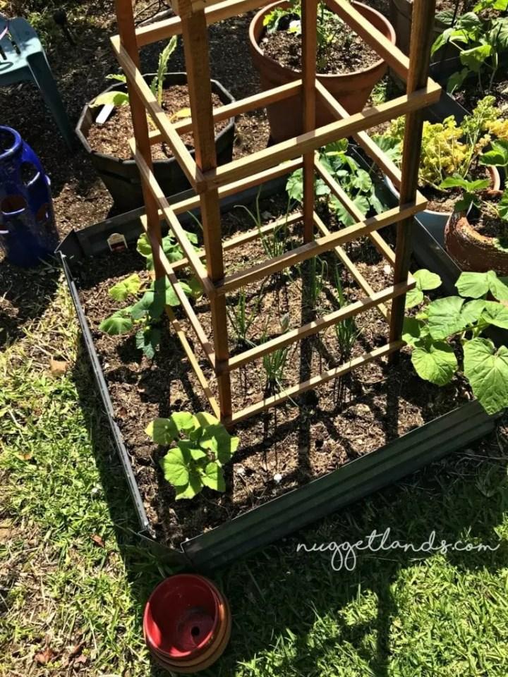 vegetable garden trellis