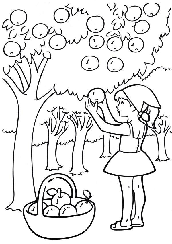 Раскраска Девочка собирает яблоки - распечатать бесплатно
