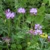 4月の野草たち(たいようの恵みでアウトドア料理! 代替企画)