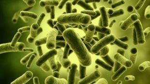 Fungsi Bakteri Baik Untuk Menjaga Kesehatan Sistem Pencernaan - Fungsi Bakteri Pencernaan