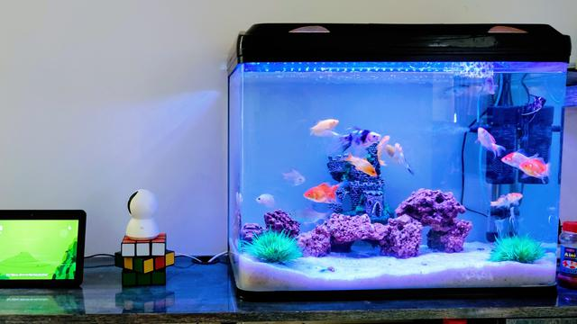 Cara Mudah dan Praktis Membersihkan Kaca Aquarium - aqaurium
