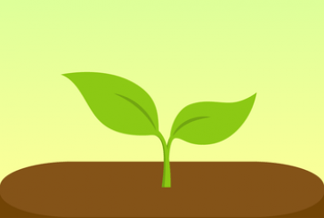 Forest: Stay focused, be present App Ipa ios Free Download