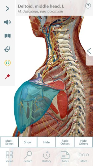 Muscle Premium Ipa App iOS Free Download