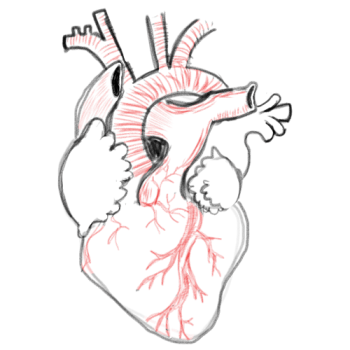 Drawing A Blank Anatomical Heart Number One With A Bullet
