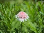 A flower hugging the sun