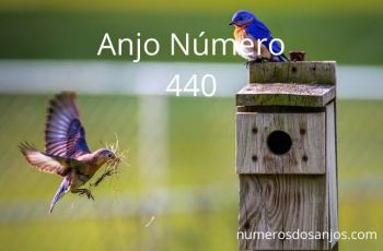 Anjo número 440 – Significado do anjo número 440
