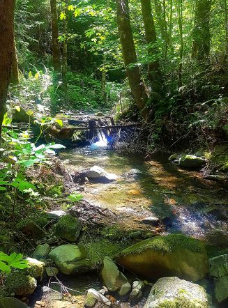Stream to the Russian River