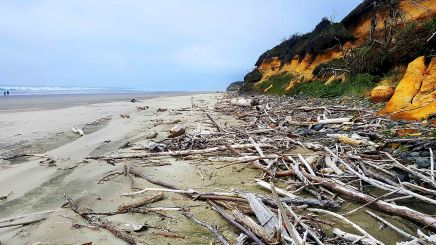 Oregon Driftwood small