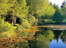Pond 1 small