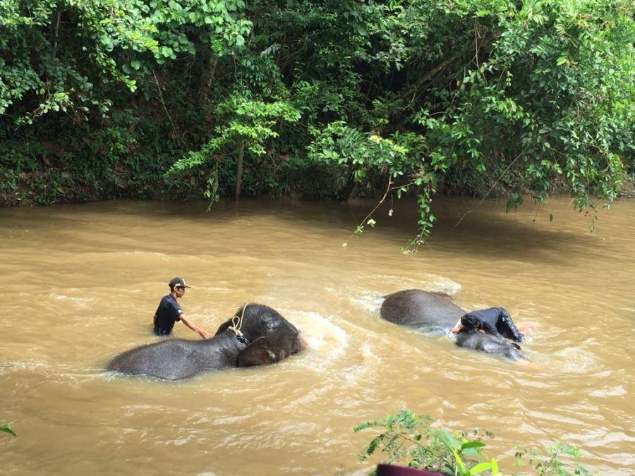 Dos elefantes bañándose en una laguna con sus cuidadores encima