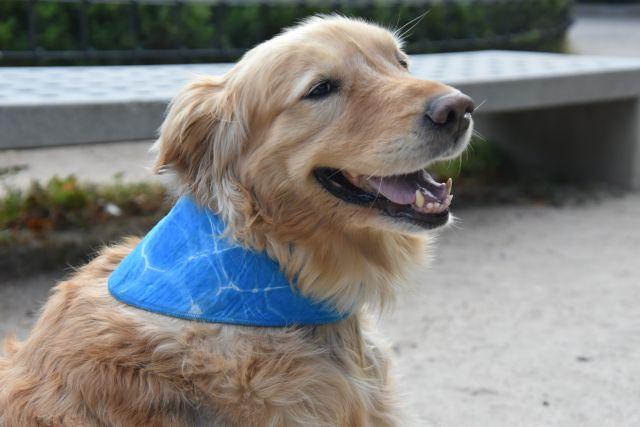 Grace sentada mirando de lado, con su bandana azul refrescante