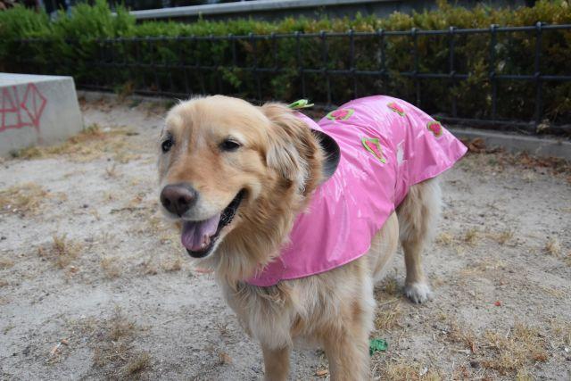 Grace con su chubasquero rosa con corazones verdes y rosas