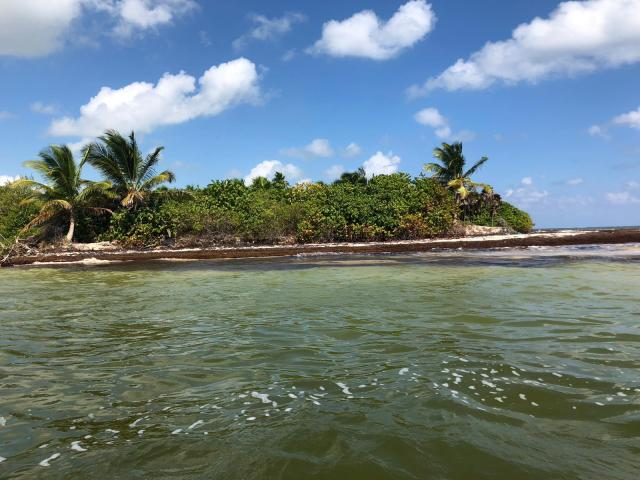 La unión del canal de Sian Ka´an con el mar. Se ve la orilla con las algas del sargazo en marrón, luego un poco de arena y después una frondosa selva. En las aguas del canal se refleja el verde de la selva y el cielo esta casi despejado con muy pocos nueves.