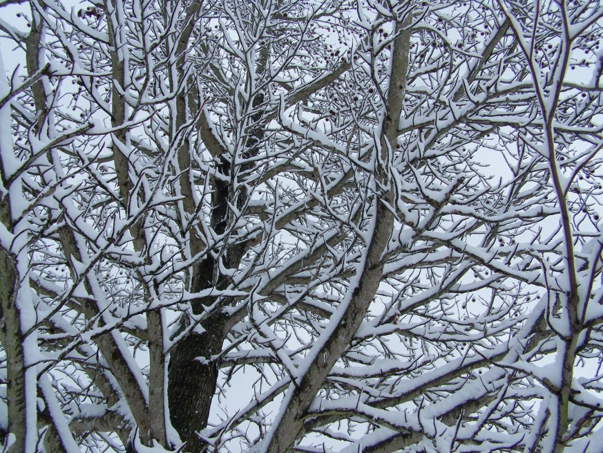 Trees decorated in white.