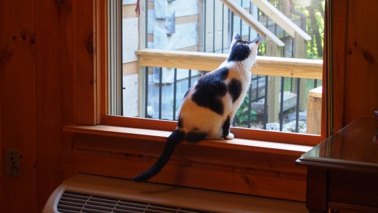 """Even our """"watch cat"""" kept an eye out from one of the cells awaiting our newest arrivals to see when the car would pull in."""