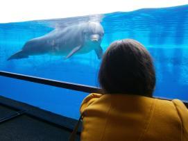 Io parlo coi delfini